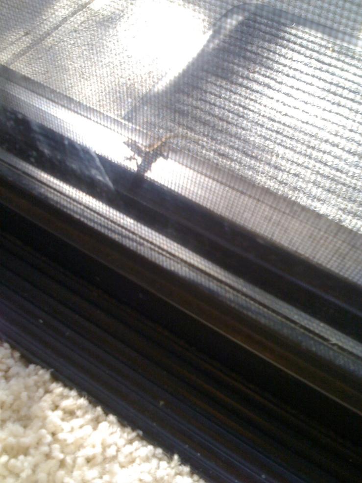 one of my many gecko friends.